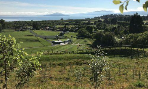 Kaitiakitaanga – our commitment